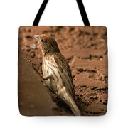 Male House Finch V10 Tote Bag
