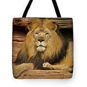 Male Lion Looking Right At Me Tote Bag
