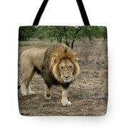 Male Lion On Alert Tote Bag