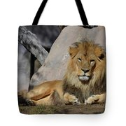 Male Lion Resting In The Warm Sunshine Tote Bag