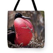Magnificient Frigatebird  Tote Bag