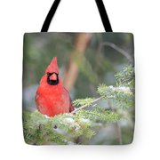 Male Northern Cardinal 2 Tote Bag