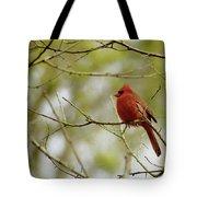 Male Northern Cardinal Tote Bag