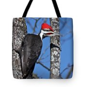 Male Pileated Woodpecker 6340 Tote Bag