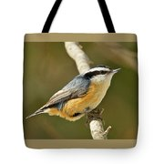Male Red Breasted Nuthatch 2151 Tote Bag