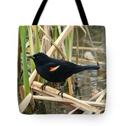 Male Red Winged Blackbird Tote Bag