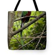 Male Resplendent Quetzal Tote Bag