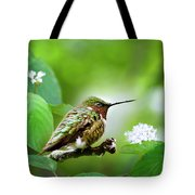 Male Ruby-throated Hummingbird At Rest Tote Bag