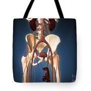 Male Skeleton With Ureter System Tote Bag
