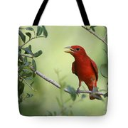 Male Summer Tanager Tote Bag