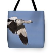 Male Upland Goose Tote Bag