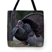 Male Wild Turkey, Meleagris Gallopavo Tote Bag