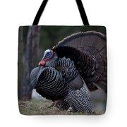 Male Wild Turkey, Meleagris Gallopavo Tote Bag