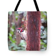 Male Yellow-bellied Sapsucker Tote Bag