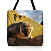 Malibu California Baby Sea Lion Tote Bag