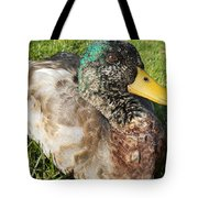 Mallard Close Up Tote Bag