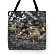 Mallard Duck A4 Tote Bag