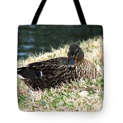 Mallard Female 1 Tote Bag