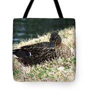 Mallard Female 1 Tote Bag