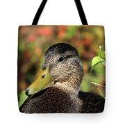 Mallard In The Fall Tote Bag