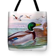 Mallard Or Wild Duck Antique Bird Print Joseph Wolf Birds Of Great Britain  Tote Bag