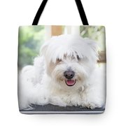 Maltese Dog Is Laying Next To Pile Of Hair Tote Bag