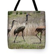 Mama And Two Juvenile Sandhill Cranes Tote Bag
