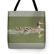 Mama Mallard And Her Ducklings Out For A Morning Swim Tote Bag