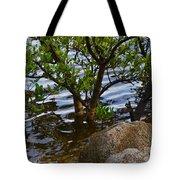 Mangroves And Coquina Tote Bag