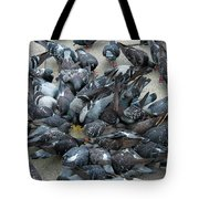 Many Doves At Piazza San Marco Venice Tote Bag