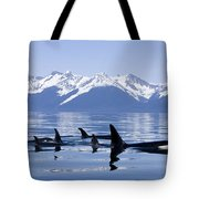 Many Orca Whales Tote Bag by John Hyde - Printscapes