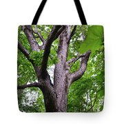 Maple Branches Tote Bag