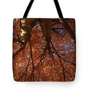 Maple Dreaming Tote Bag