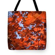 Maple Leaves Aglow Tote Bag