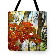 Maple Leaves And Birch Bark Tote Bag