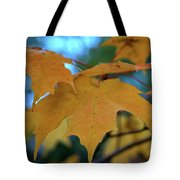 Maple Leaves In Autumn Tote Bag