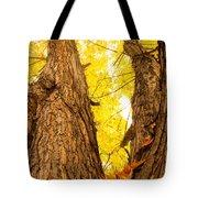 Maple Tree 3 Tote Bag