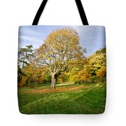Maple Tree On The Slope. Tote Bag