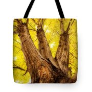 Maple Tree Portrait 2 Tote Bag