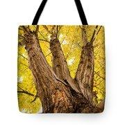 Maple Tree Portrait Tote Bag