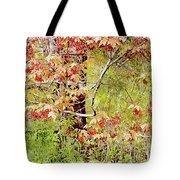 Maple Tree W C  Tote Bag