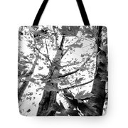 Maple Trees In Black And White Tote Bag