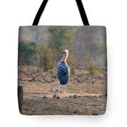 Marabou Stork Of Botswana Africa Tote Bag