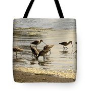 Marbled Godwit Birds At Sunset Tote Bag