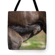 Mare And Foal, Icelandicelandic Tote Bag