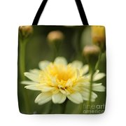 Marguerite Daisy Named Madeira Crested Primrose Tote Bag