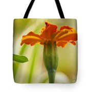 Marigold On A Lovely Spring Day Tote Bag