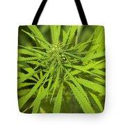 Marihuana Tote Bag