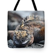 Marine Iguana  Tote Bag