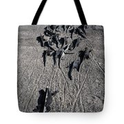 Galloping Iguanas Of Galapagos Tote Bag